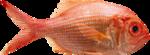 рыба (5).png