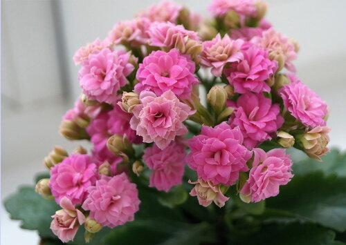 Цветы на радость нам даны