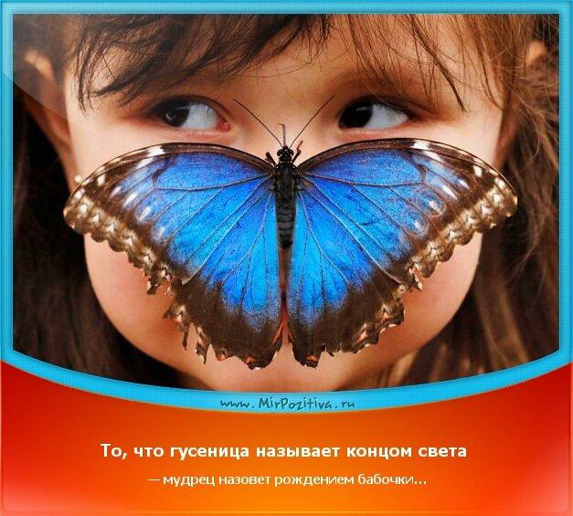 позитивчик дня - То, что гусеница называет концом света — мудрец назовет рождением бабочки…