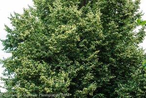 s:деревья,s:листопадные