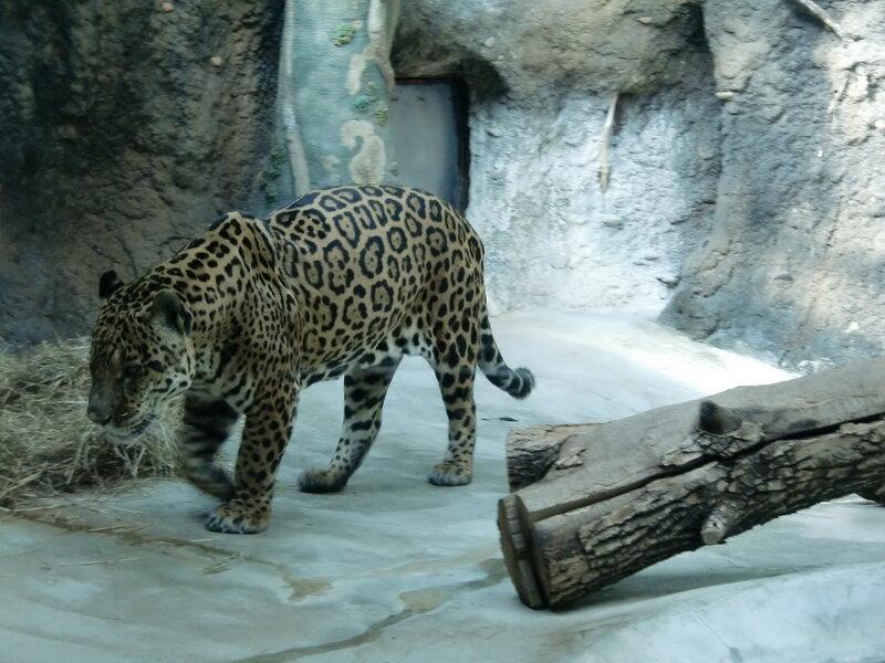 Картинки животных из зоопарка москвы