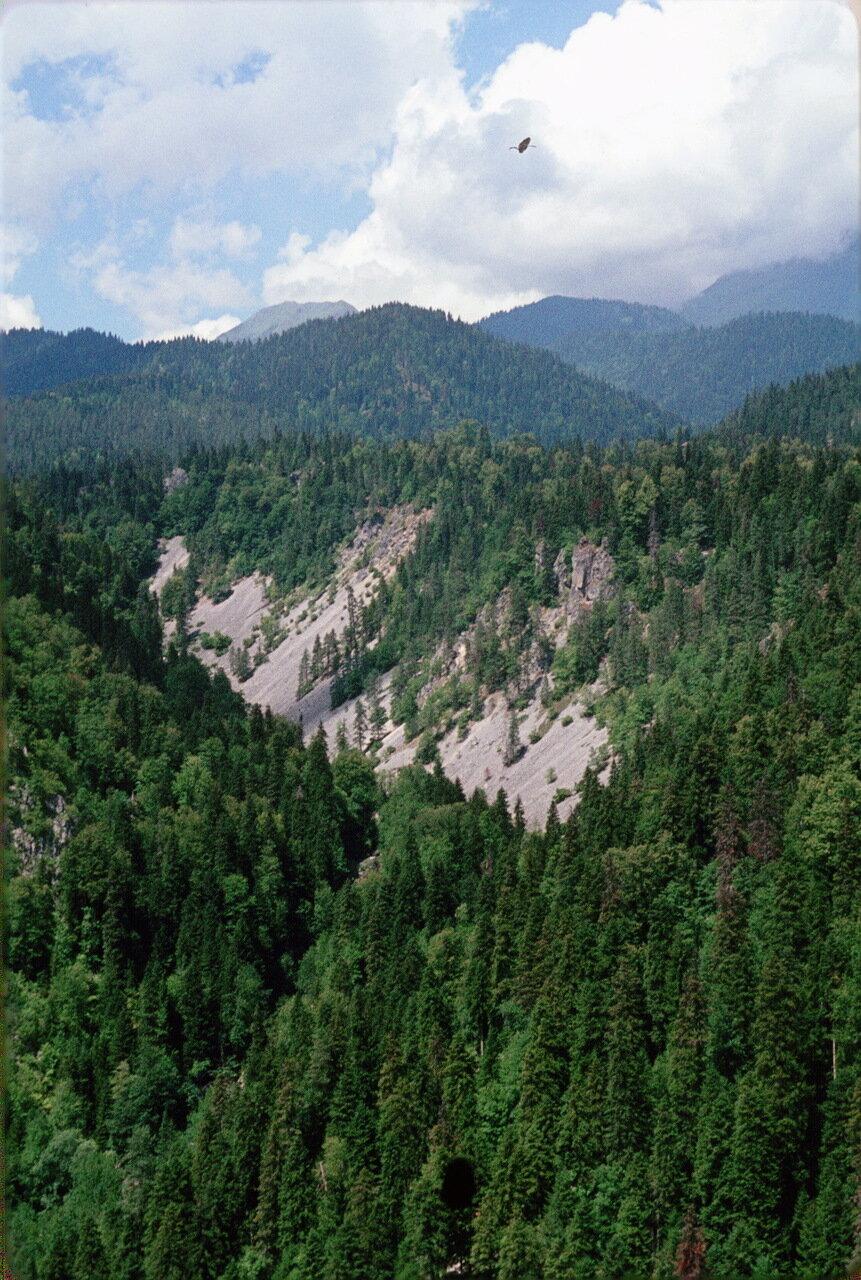 Абхазия. Лес возле озера Рица