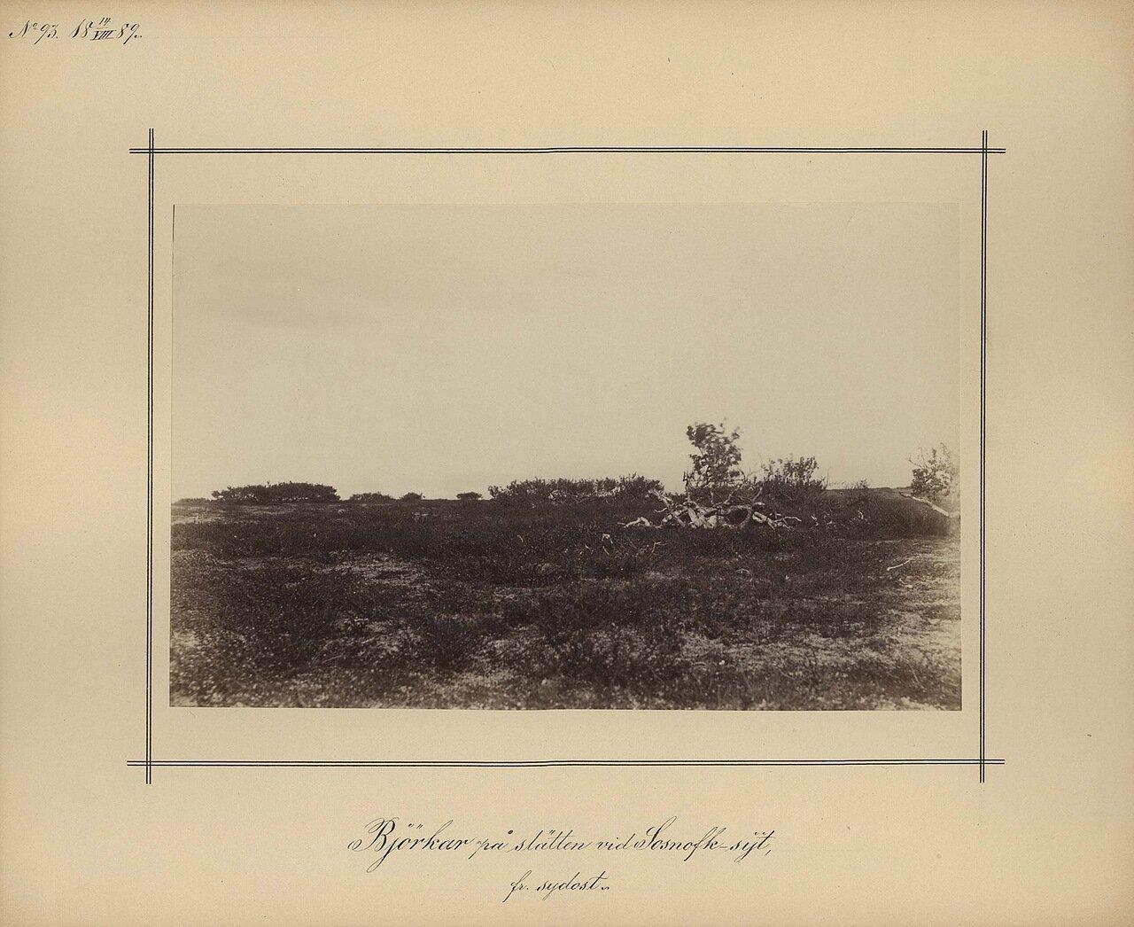 14.8.1889. Березовая роща на северо-западе острова Сосновец