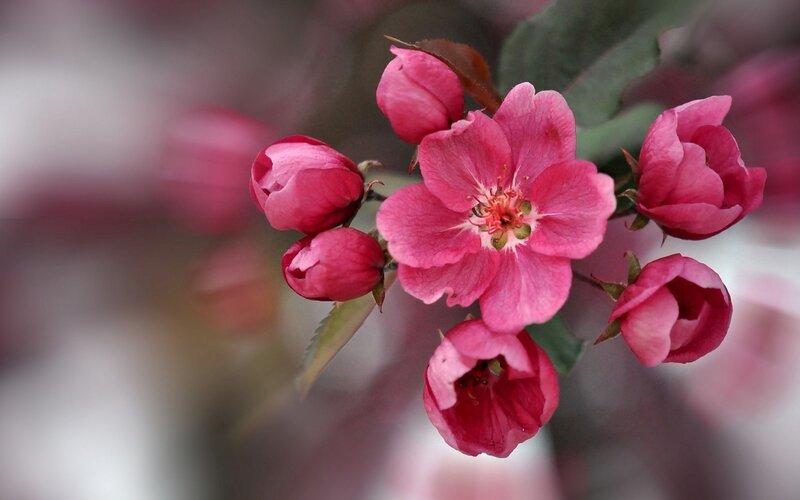 Цветы фото фон