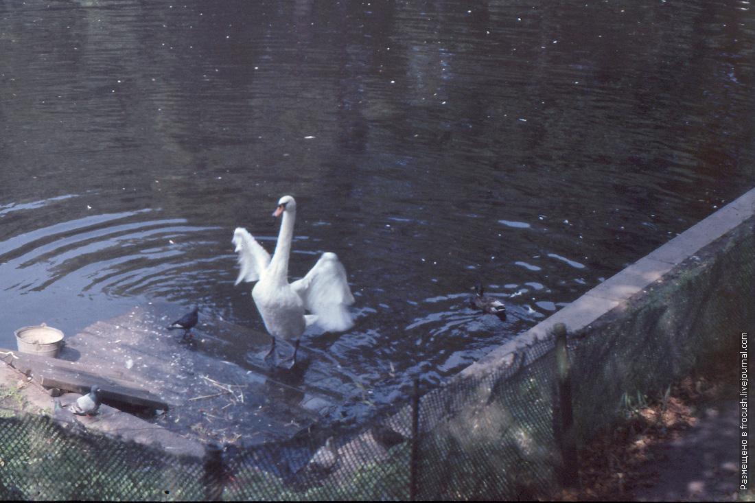 Карпиев пруд в Летнем саду