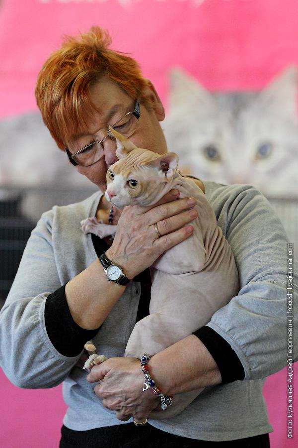 Канадский сфинкс выставка кошек ВВЦ