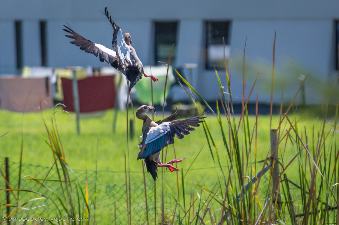 Африканские птицы