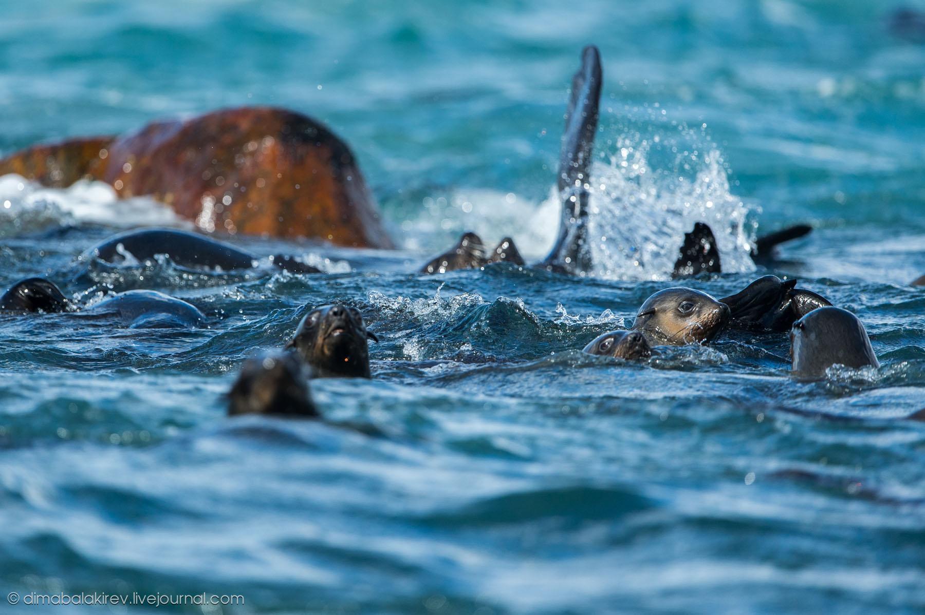 ЮАР. Киты и морские львы.