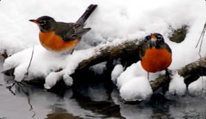 зима-птицы-пнг-3.png