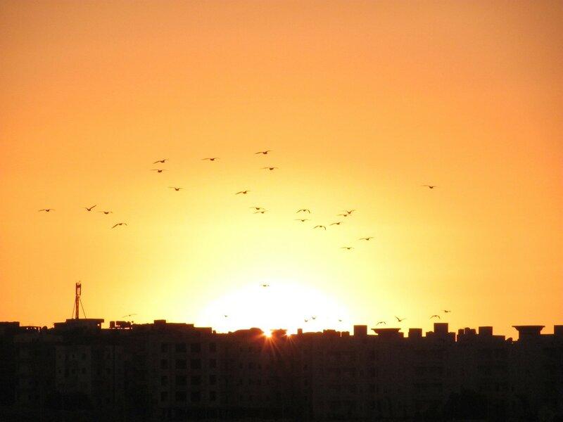 Полет на закате