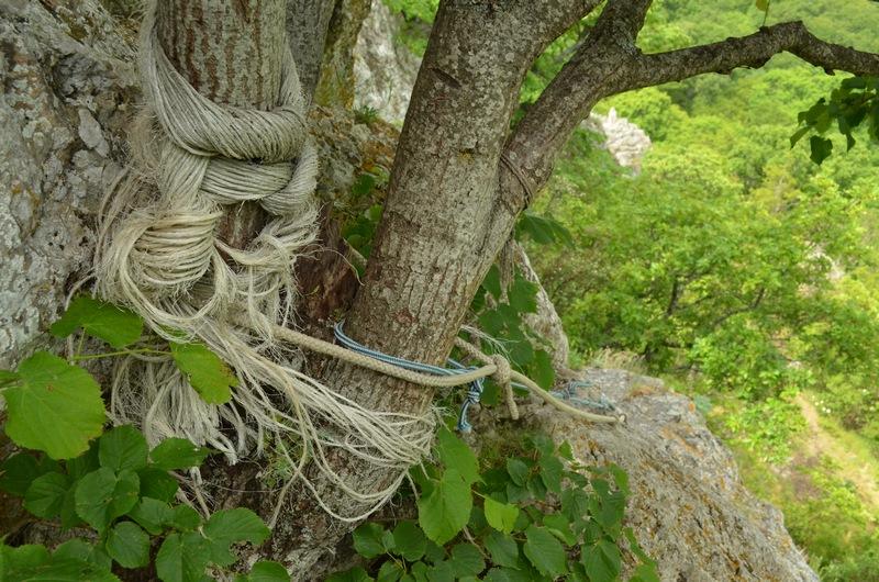 веревка привязанная к стволу || yo-klmn.ru