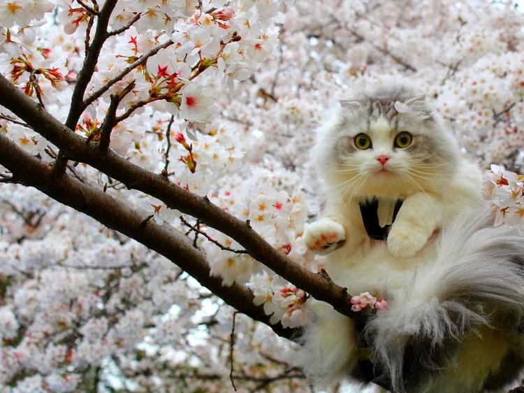 beautiful spring day beautiful spring cat