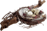 Holliewood_NatureJournal_Nest1.png