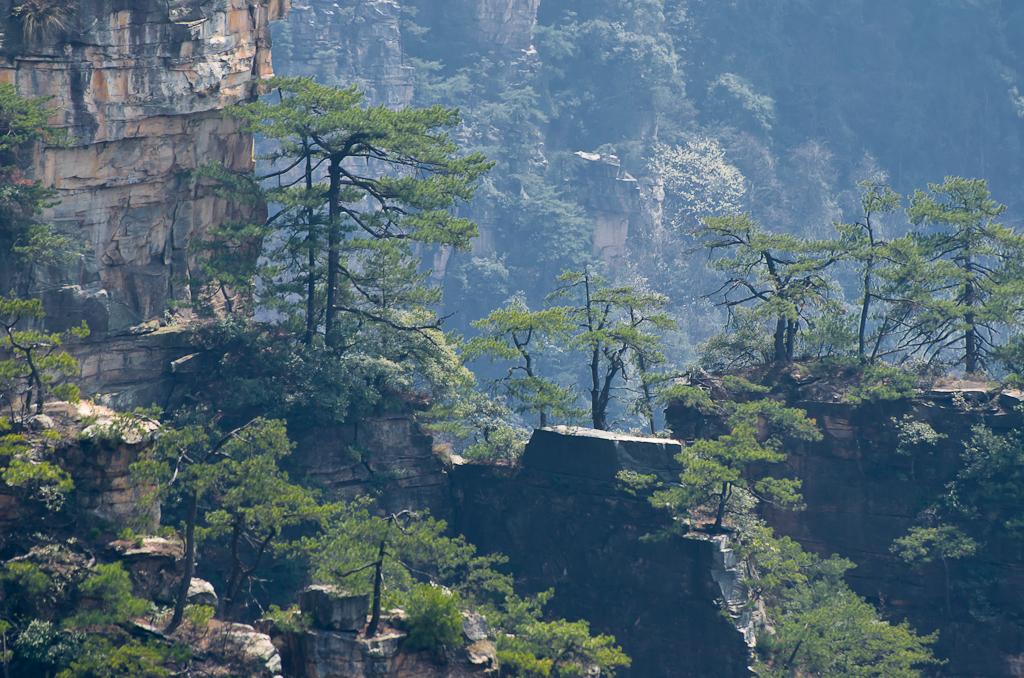 Фото 13. Мой Чжанцзяцзе. Незабываемая экскурсия в национальный парк в Китае