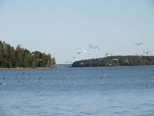 Волчихинское водохранилище (Свердловская область)
