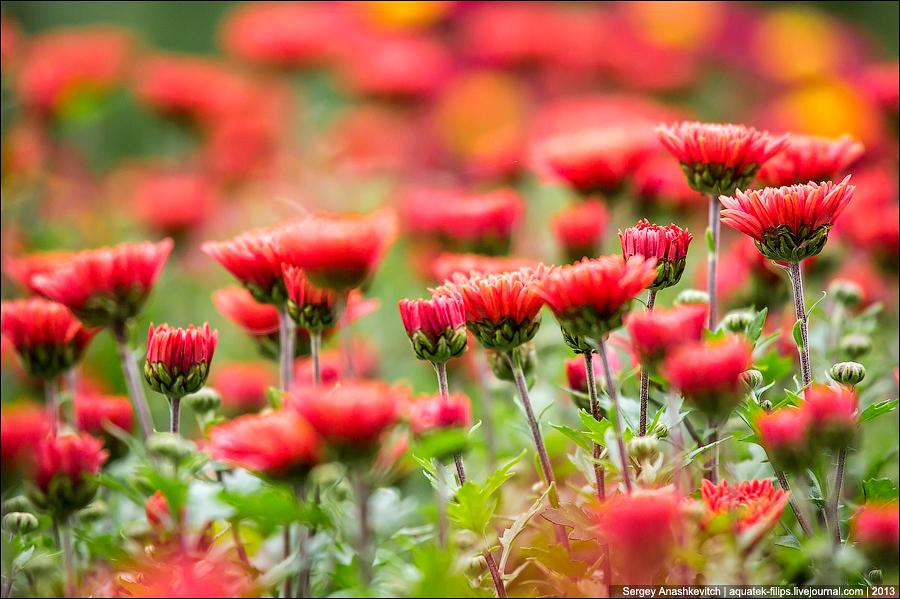 Никитский ботанический сад в Крыму