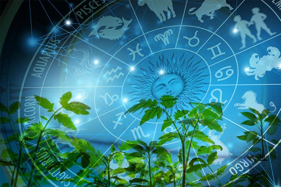 Три правила биодинамики, применимые к выращиванию рассады