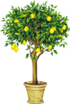 tree (34).png