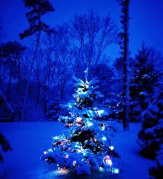 С Новым годом! Новогодняя красавица елка открытки фото рисунки картинки поздравления