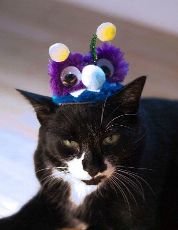 Заставить кота вас ненавидеть просто...