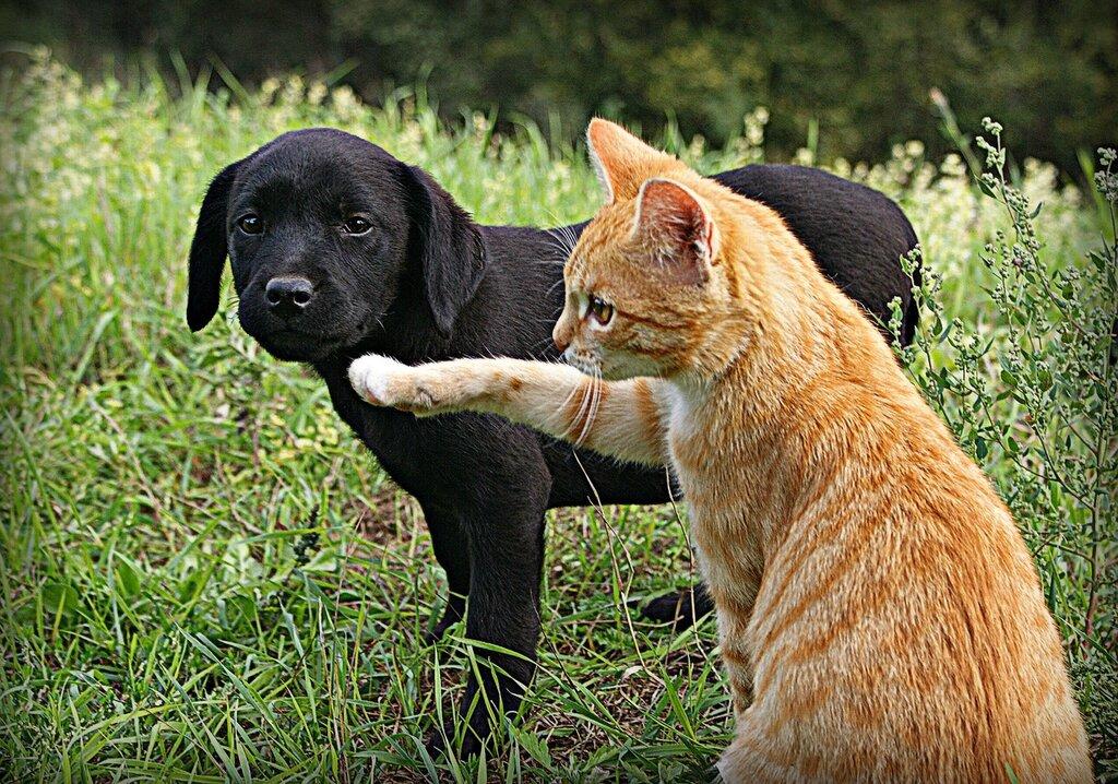 Смотреть картинки коты и собаки