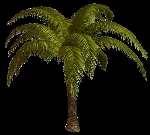 Шведская Пальма