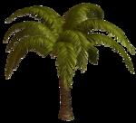 R11 - Palms - 2013 - 014.png