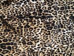 Leopard (6).jpg