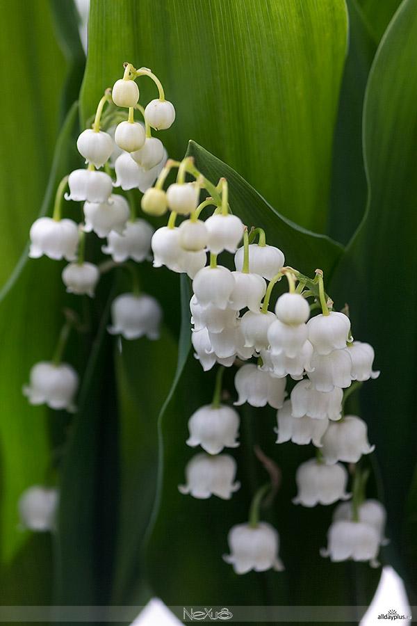 Я люблю все цветы, часть 42