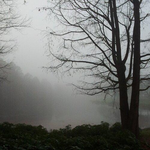 Туманный денёк