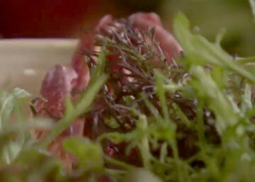Смесь разных листовых салатов