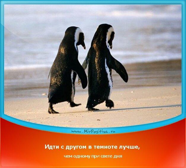 позитивчик дня - Идти с другом в темноте лучше, чем одному при свете дня