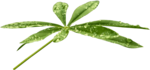Bush and Grass  (119).png