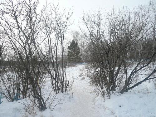 Природа возле могилы
