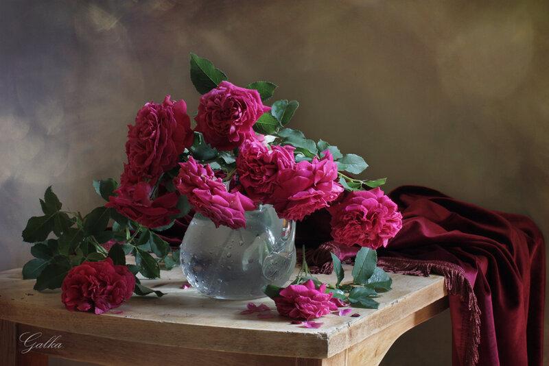 Вишнёвые розы