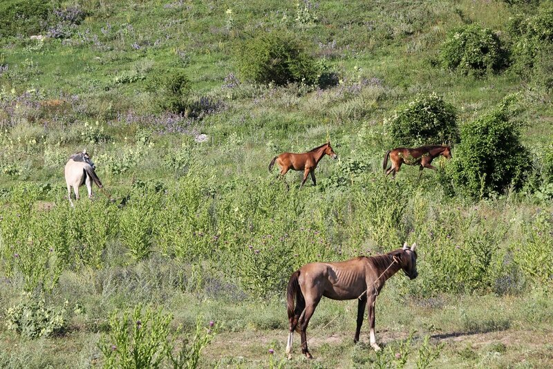 Лошади, кони и жеребята в пещерном городе Эски-Кермен, Крым IMG_5845.JPG