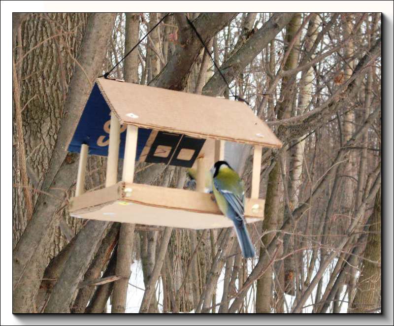 для птиц кормовой столик.