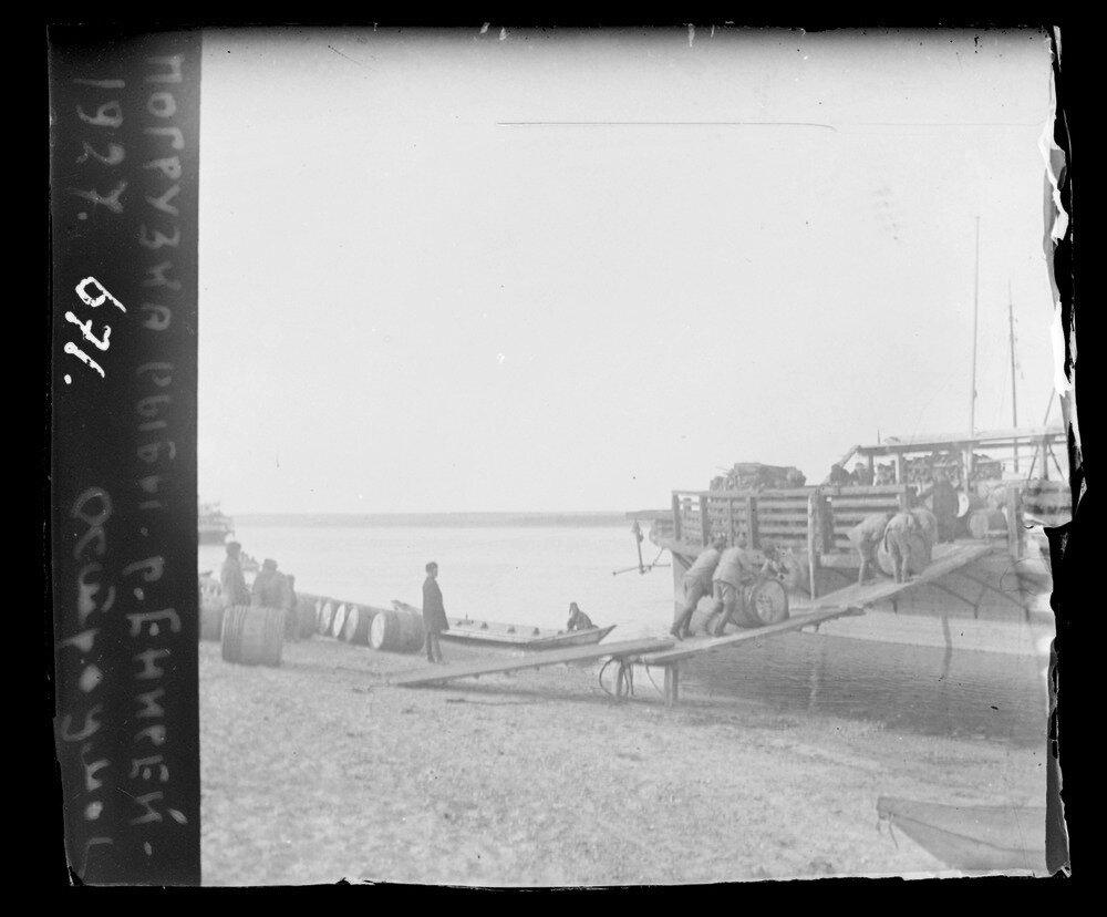 1927. Енисей. Погрузка рыбы