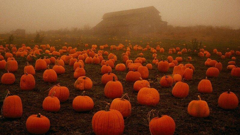 4028180-pumpkin-wallpapers.jpg
