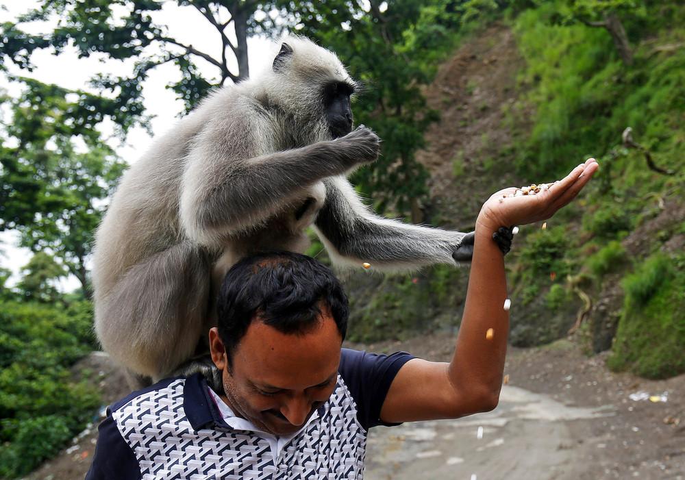 Интересные кадры из Индии