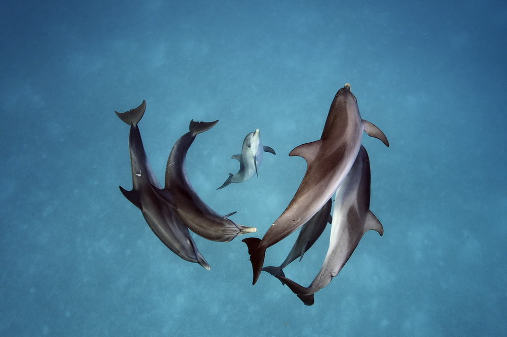 Подводный мир на снимках Брайана Скерри