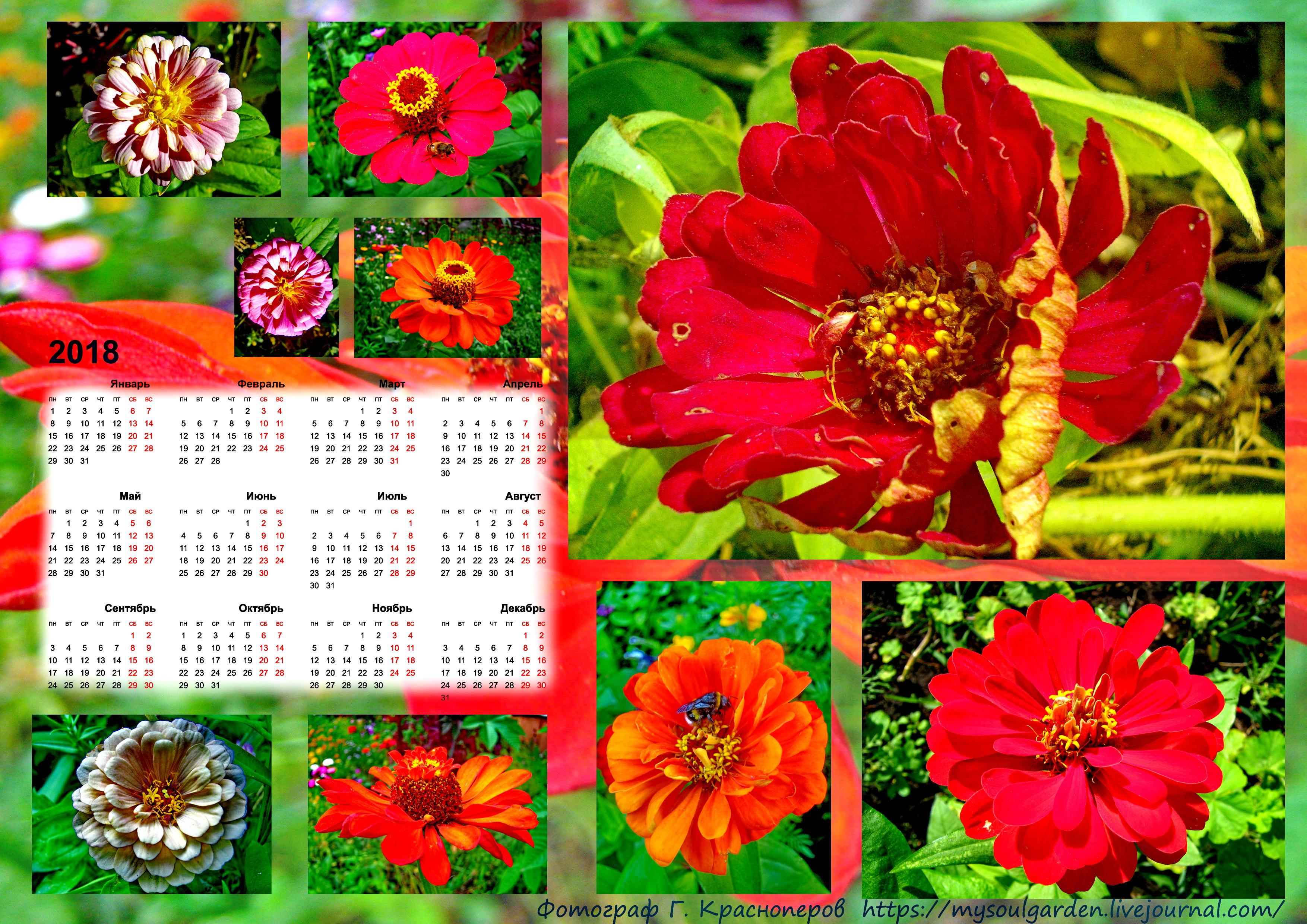 Календарь-2018 с Цинниями.jpg