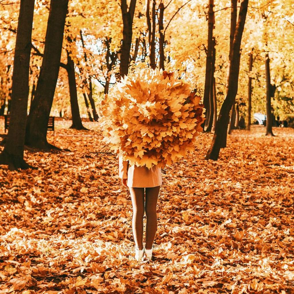 autumn0038-59e7b2392fa48__880.jpg