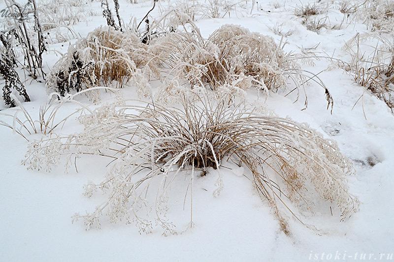 сухая_трава_под_снегом_sukhaya_trava_pod_snegom