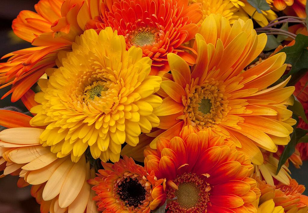 Герберы разные бывают:Настолько ярки их цвета!В них позитив сплошной играет,Они чудесны хоть когда!