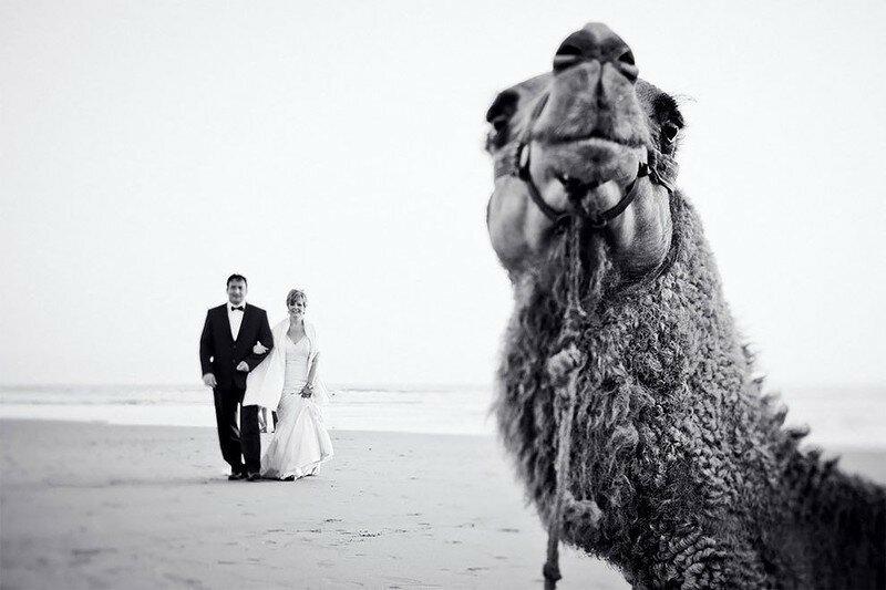 0 17af1d 79997bf1 XL - Курьезные свадебные фотографии с участием животных