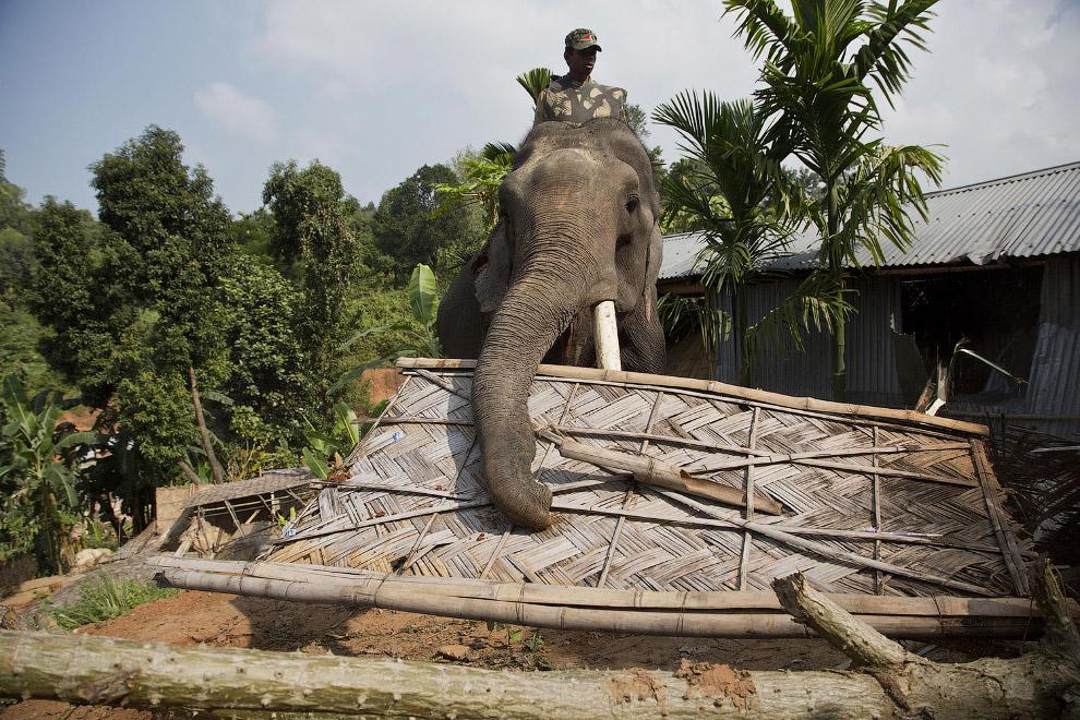 12. Слон против дома. У дома нет шансов. (Фото Anupam Nath):