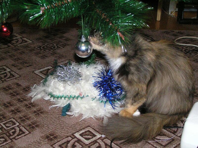 """Кошка Соня """"помогает"""" наряжать ёлку"""