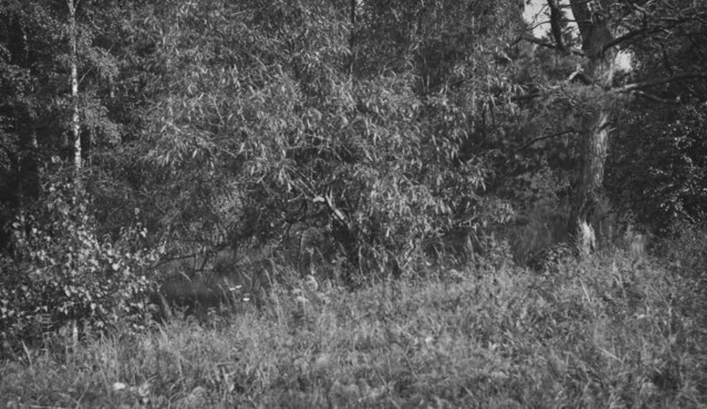 06. Лес в окрестностях реки Агул