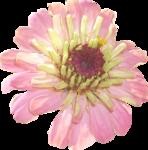 цветы_розовые (2).png